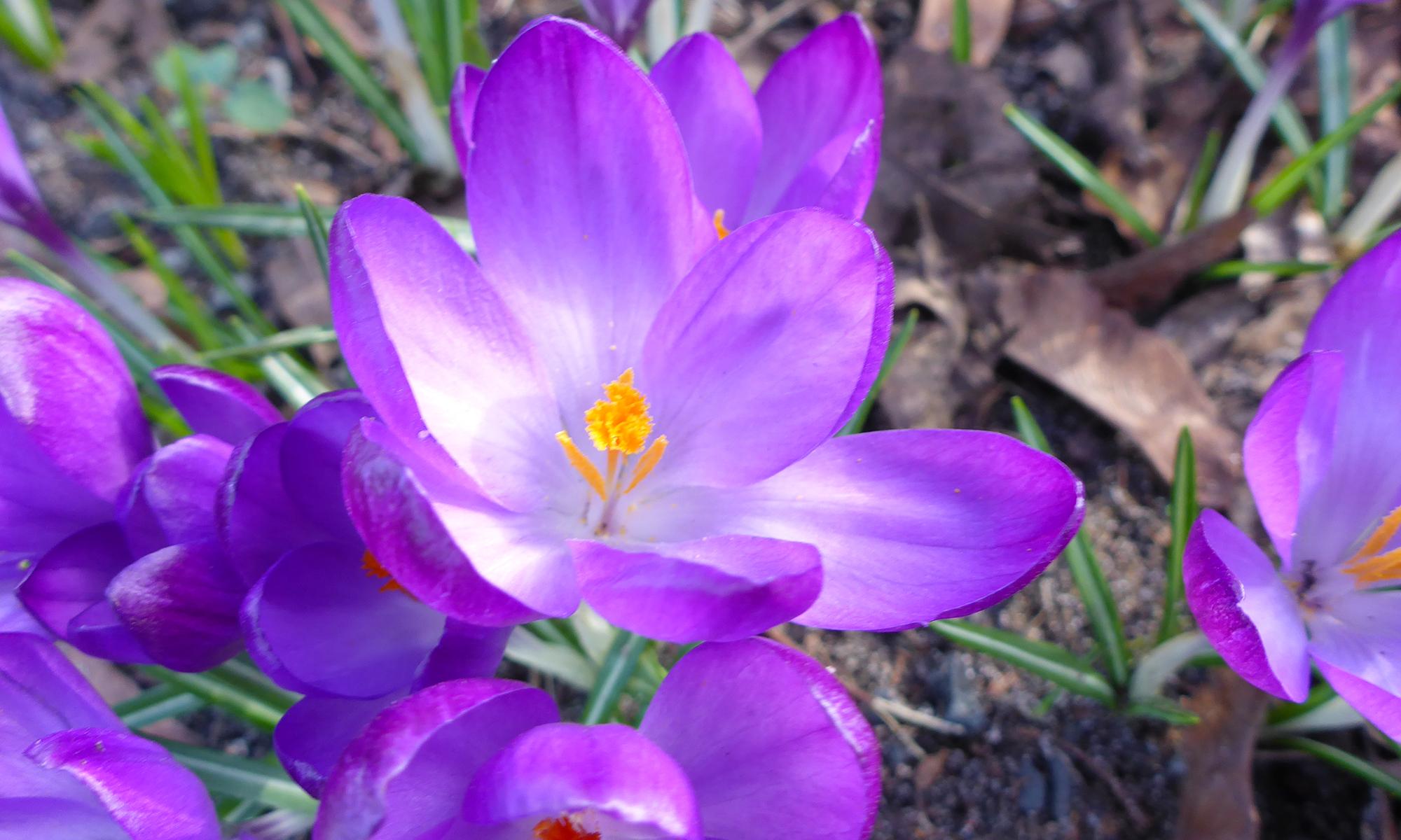 Foto Blume
